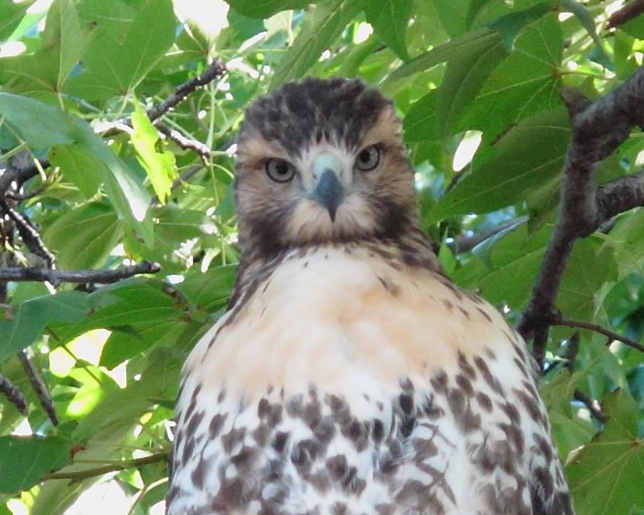 fledgling-10-09-05-26-c