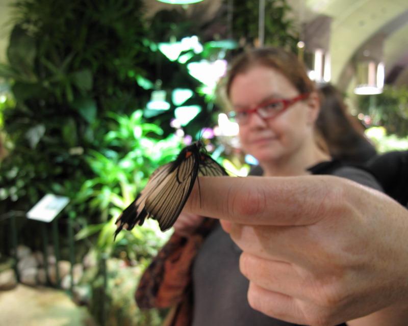 kris-butterfly-09-10-25-17-800x640