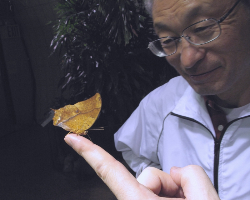 nasu-san-and-butterfly-14-11-29-62_resize
