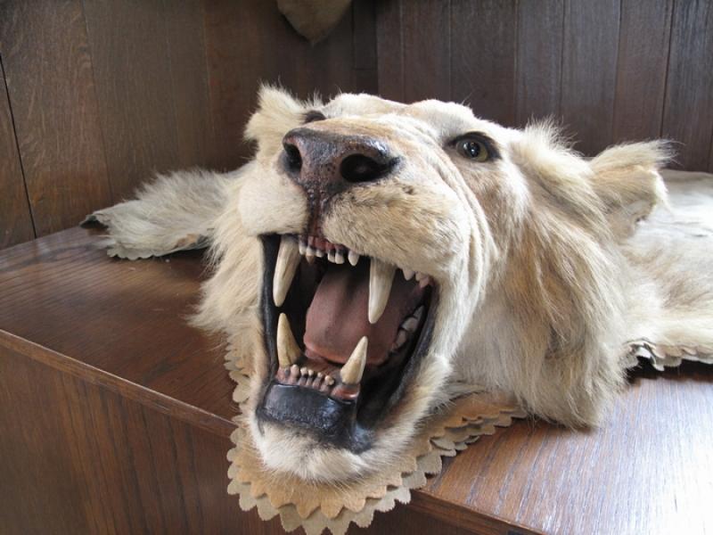trs-lion-700